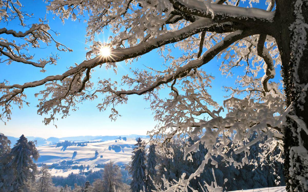 Фото бесплатно дерево, зима, снег, сугробы, солнце, природа