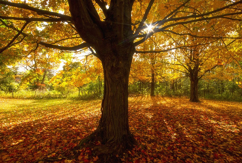 Фото бесплатно осень, поляна, деревья, пейзаж, пейзажи