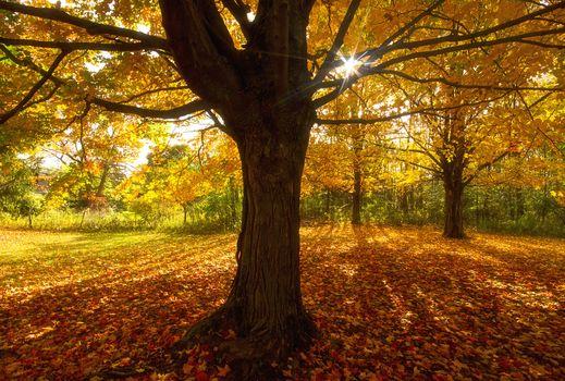 Фото бесплатно осень, поляна, деревья