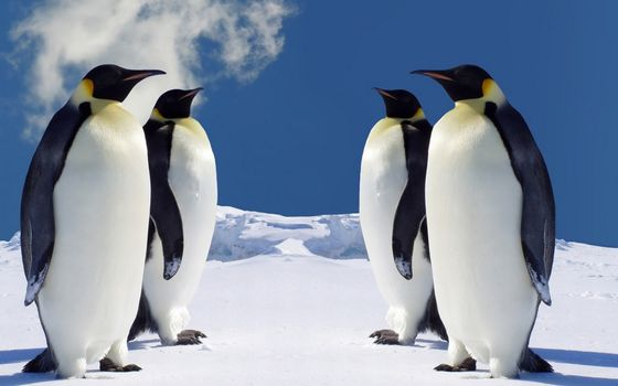 Photo free penguins, beaks, paws
