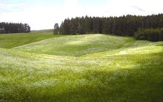 Заставки поле,трава,зеленая,лес,деревья,небо,облака