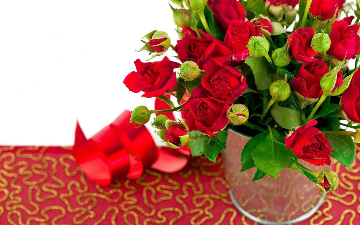 Фото бесплатно розы, бутоны, лента - на рабочий стол