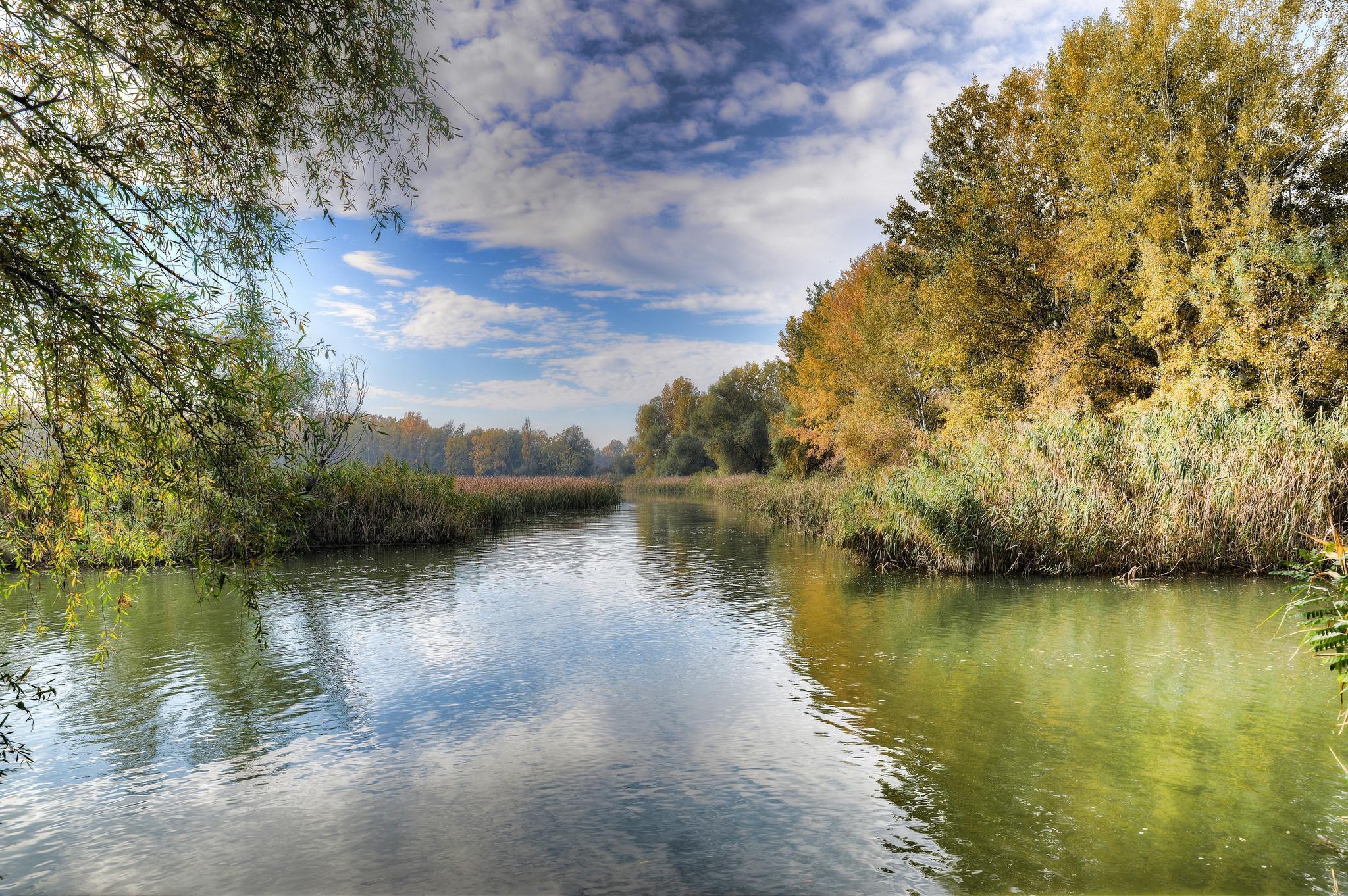 обои Озеро Тиса, Венгрия, осень, деревья картинки фото