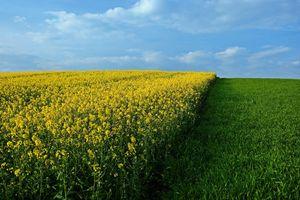 Бесплатные фото поле,цветы,трава,небо,пейзаж