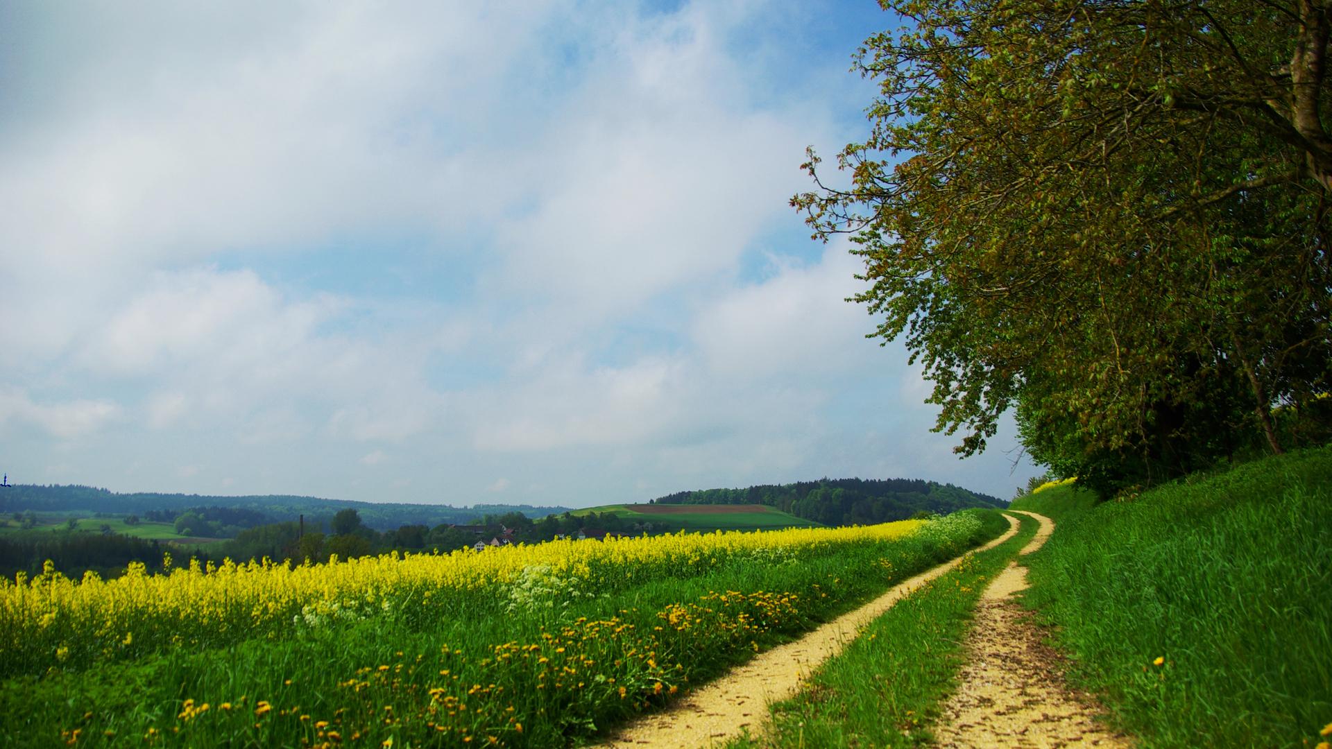 Дорога через зеленое поле  № 2604514 бесплатно