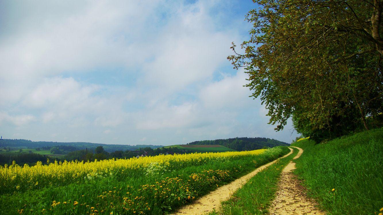 Фото бесплатно холмы, полевая дорога, трава - на рабочий стол