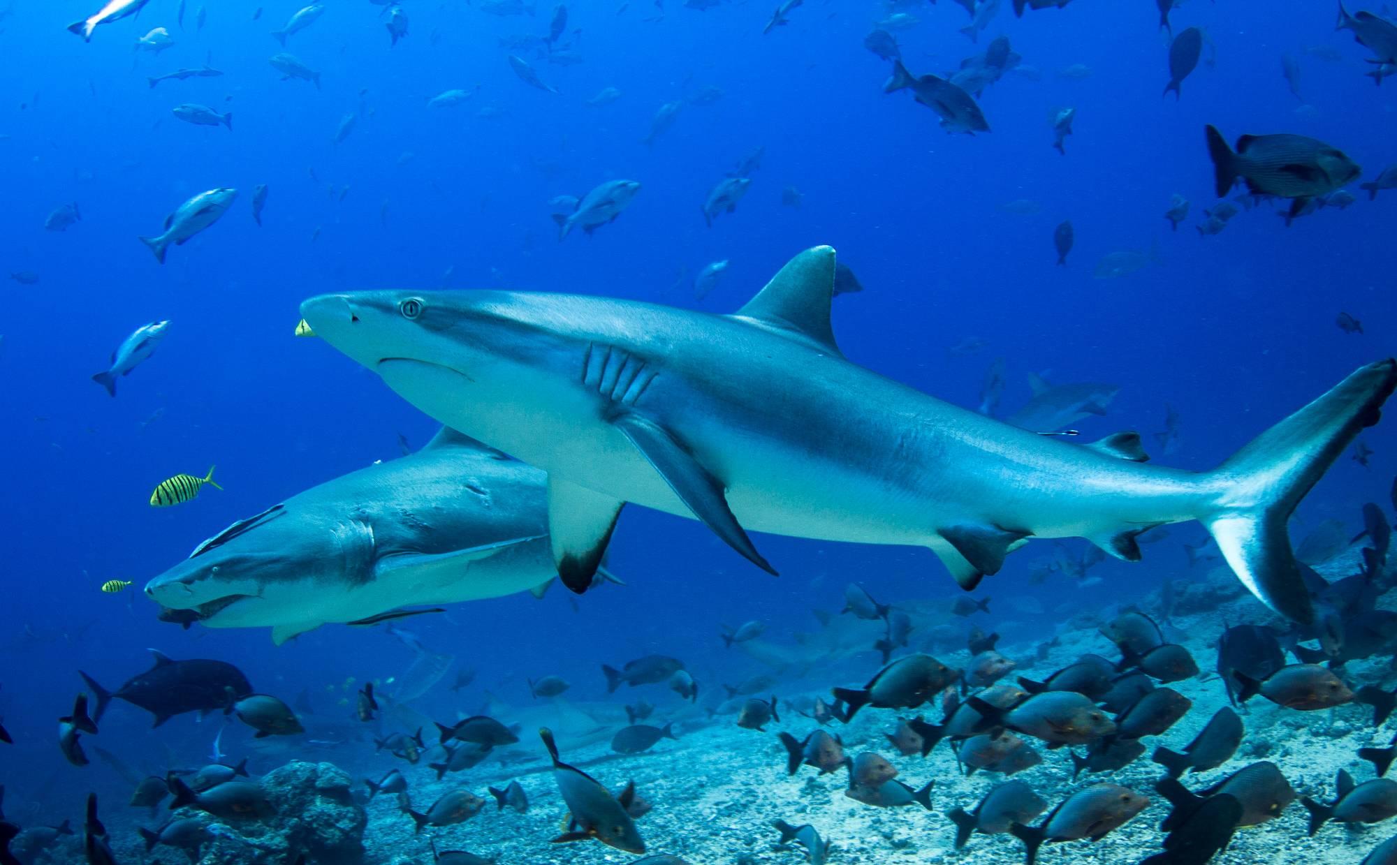 обои море, морское дно, рыбы, акулы картинки фото