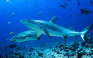 Бесплатные фото море,морское дно,рыбы,акулы,природа