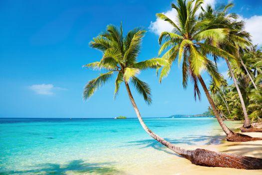 Бесплатная картинка пальмы, море