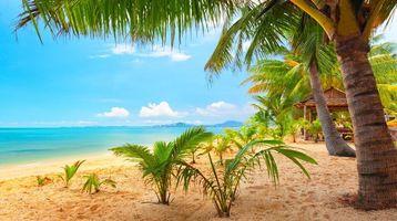 Заставки пальмы, пляж, песок