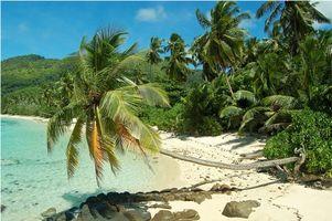 Бесплатные фото море,пальмы,берег,пляж,Сейшельские острова,пейзаж