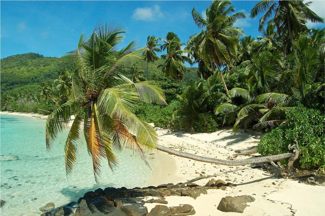 Обои море, пальмы, берег картинки на телефон