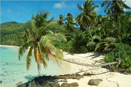 Фото бесплатно пальмы, пляж, Сейшельские острова