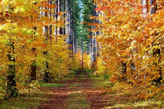 Фото бесплатно пейзаж, осень, осенний лес