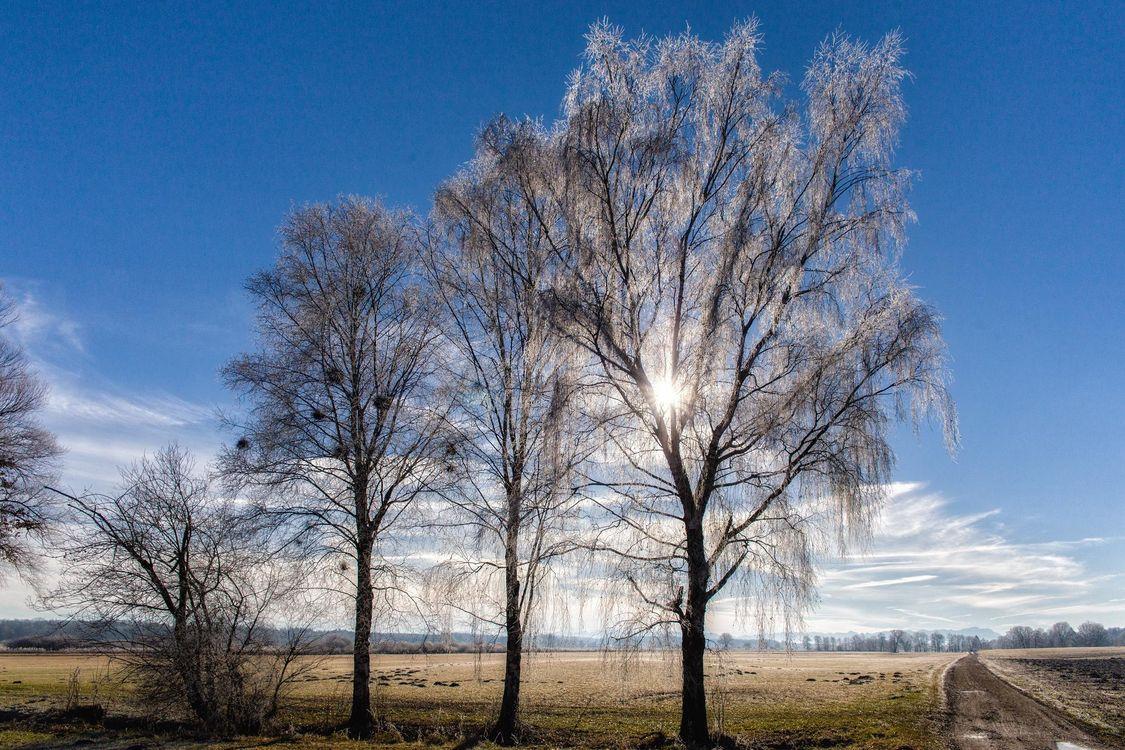 Фото бесплатно поле, осень, деревья, пейзаж - на рабочий стол