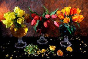 Фото бесплатно натюрморт, цветы, тюльпаны