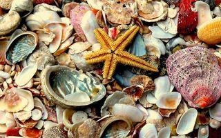 Фото бесплатно ракушки, цветные, звезда, сухие, заставка