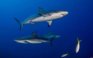 Фото бесплатно акулы, жабры, плавники, хвосты, рыбы