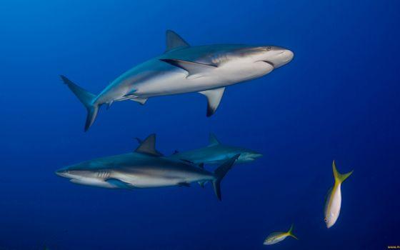 Заставки акулы, хвост, плавники