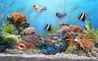 Бесплатные фото аквариум, рыбы, windows, wallpaper, обои