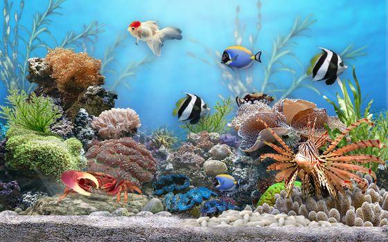 Фото бесплатно аквариум, рыбы, windows