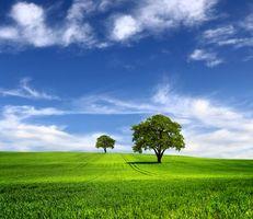 Заставки поле, деревья, небо, облака, пейзаж