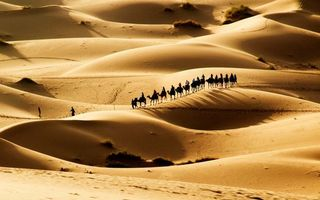 Бесплатные фото пустыня,песок,дюны,барханы,караван,верблюды,люди