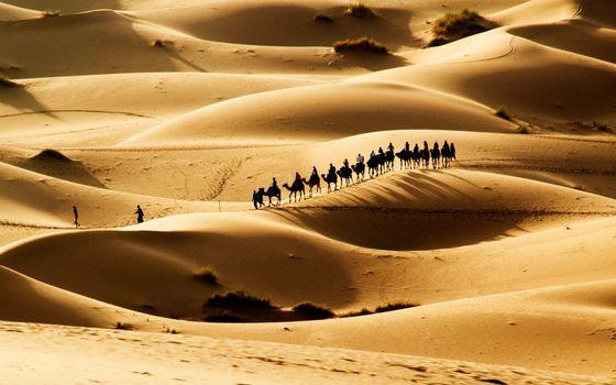Photo free desert, caravan, sand