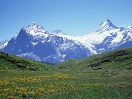 Бесплатные фото трава,цветы,горы,вершины,снег,небо