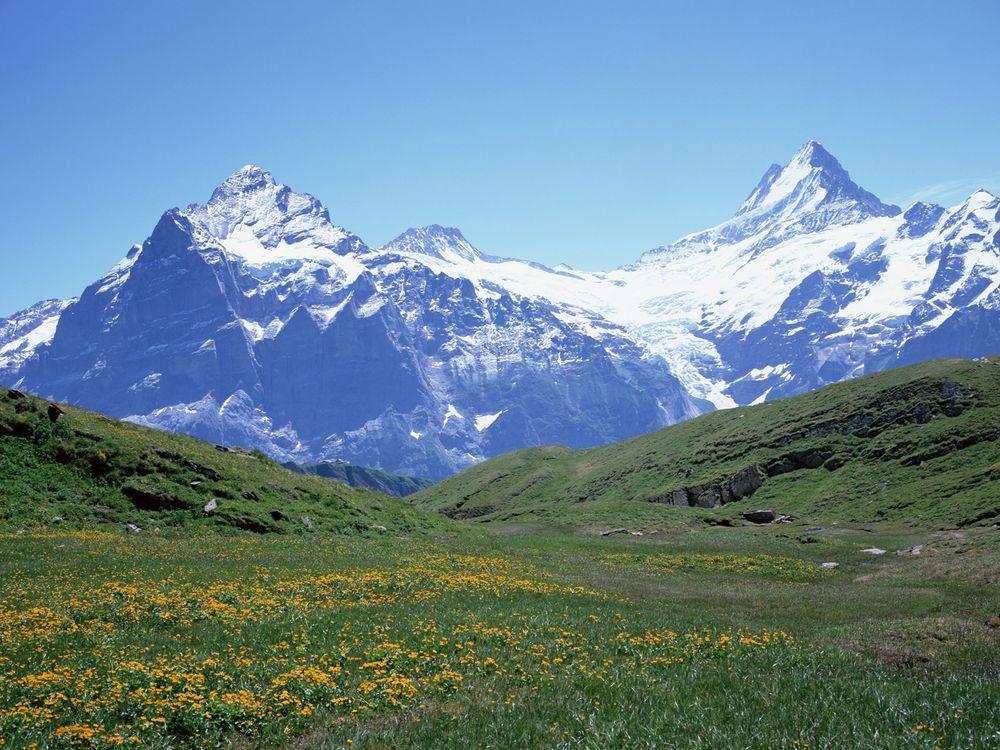Фото бесплатно вершины, снег, цветы - на рабочий стол