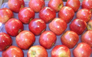 Бесплатные фото фрукты,яблоки,красные,спелые