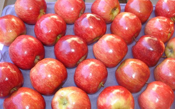 Заставки фрукты, яблоки, красные
