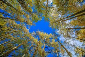 Бесплатные фото осень,лес,деревья,кроны,верхушки,небо,природа