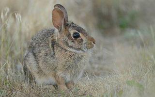 Бесплатные фото зайчик,морда,уши,лапы,шерсть,трава