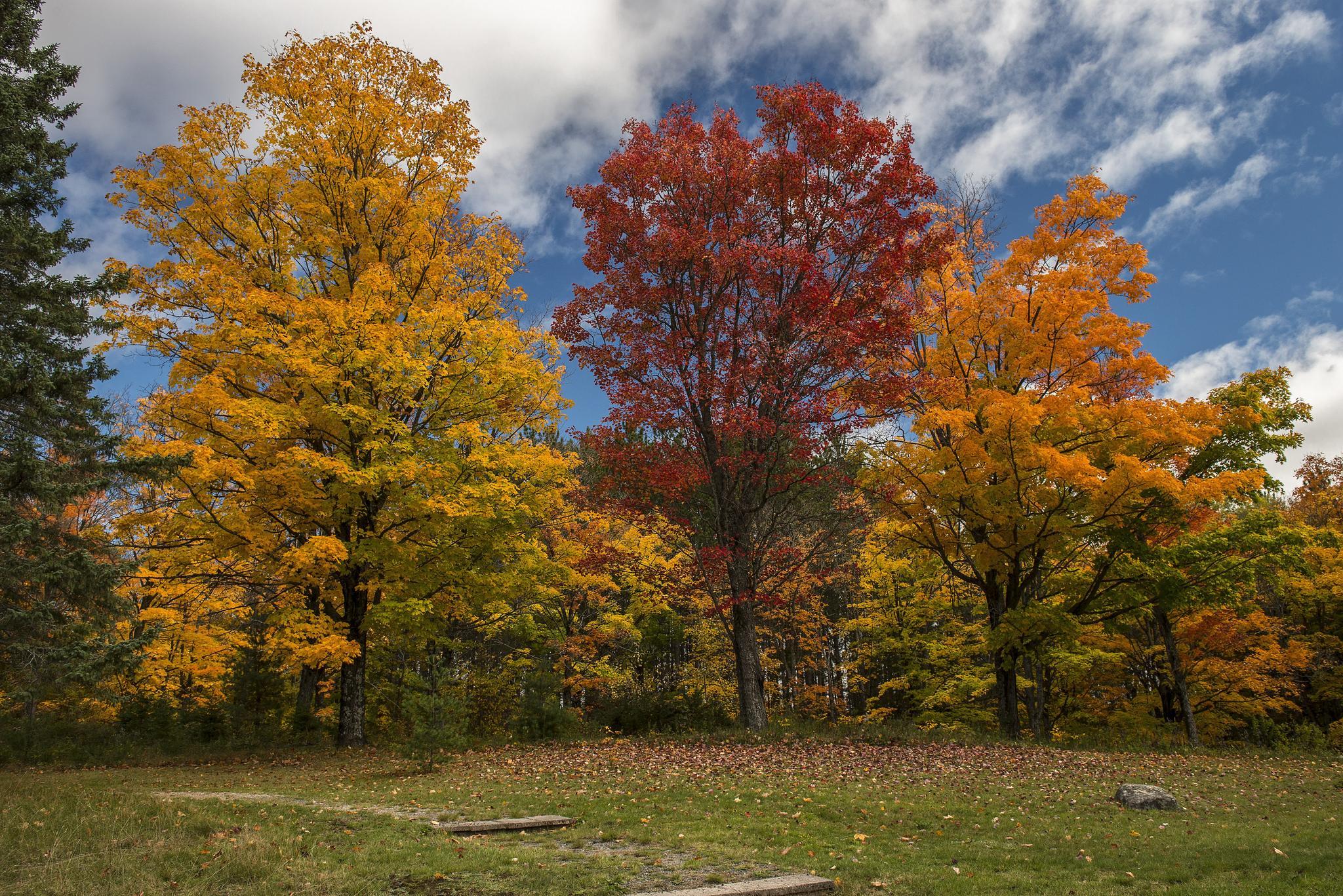 красиво картинка осенней полянки леса что