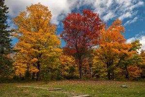 Бесплатные фото осень,поляна,деревья,пейзаж
