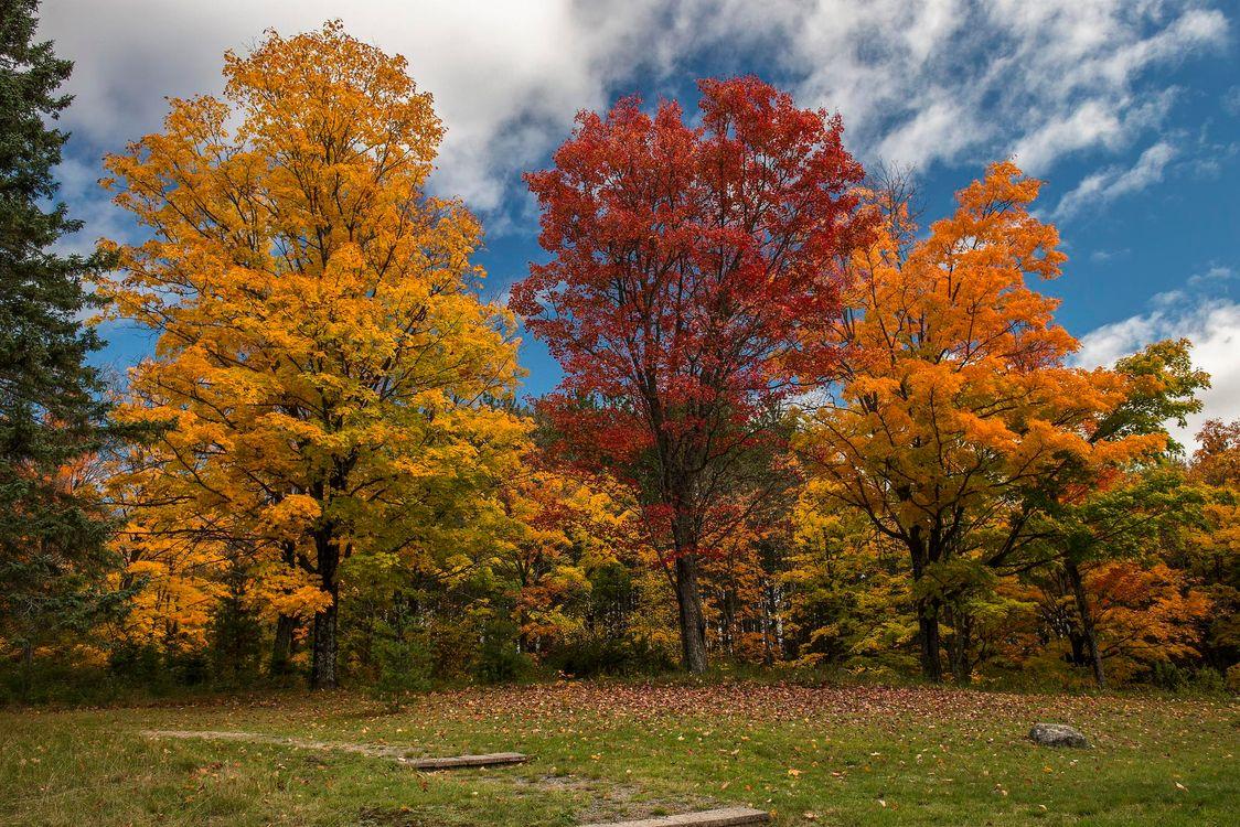 Картинки деревья осенью
